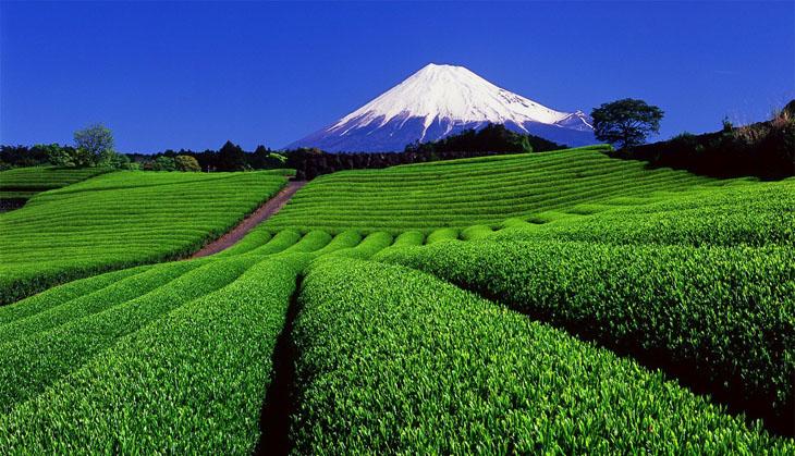 Nhật Bản là nơi có truyền thống uống trà đạo từ bột matcha