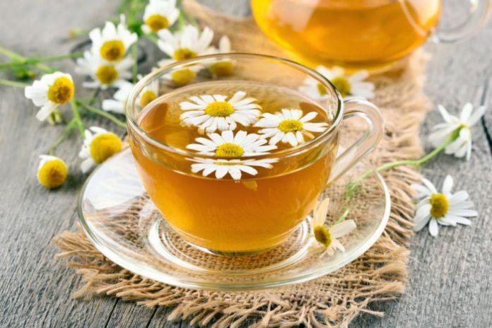 trà cúc la mã giúp hạ đường huyết